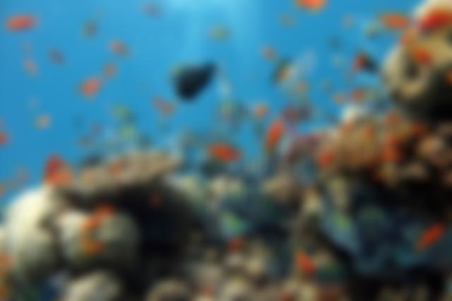 O fundo do mar é um mundo novo e colorido