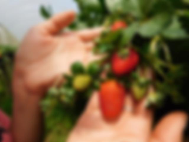 Agroturismo forte em Mucugê e região
