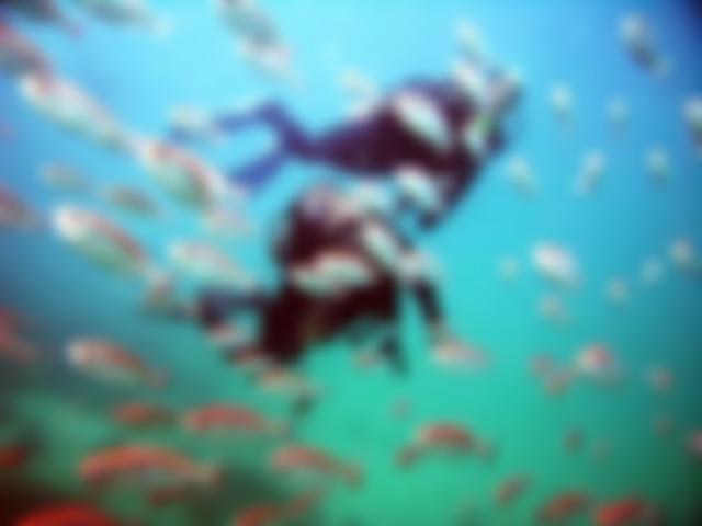 Mergulho em Arraial do Cabo - Pousada Marina dos Anjos
