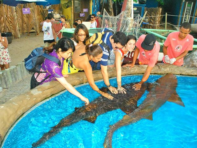 Tubarão-lixa - Praia do Forte | Imagem: Projeto Tamar
