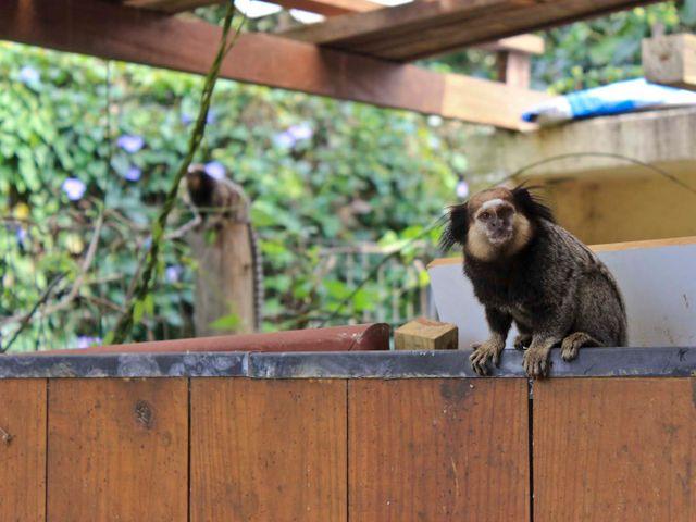 Animais Pousada Casa da Lagoa - Florianópolis